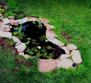 Small goldfish pond - photo#28